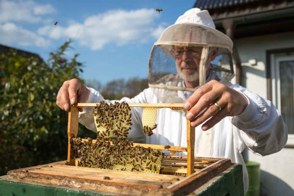 Beekeeper checking bees