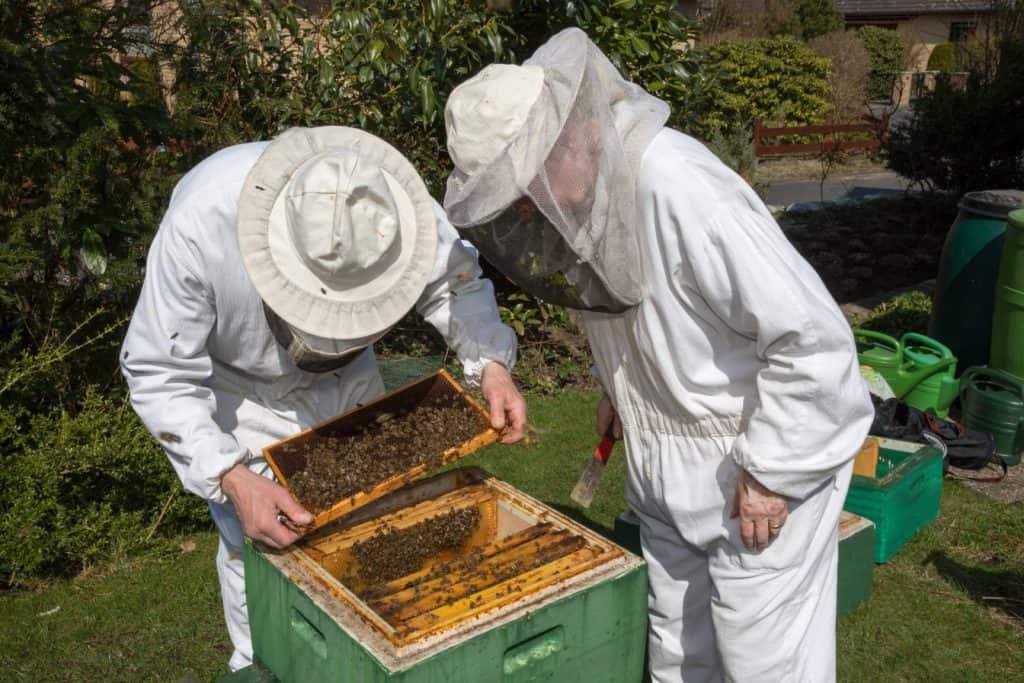 Beekeeping buddies