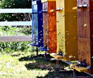 Multiple Colored Hives