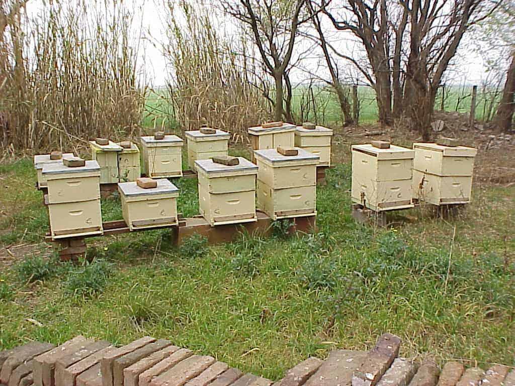 Multiple beehives