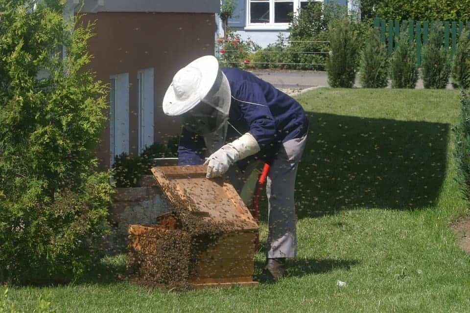 Urban beekeeper