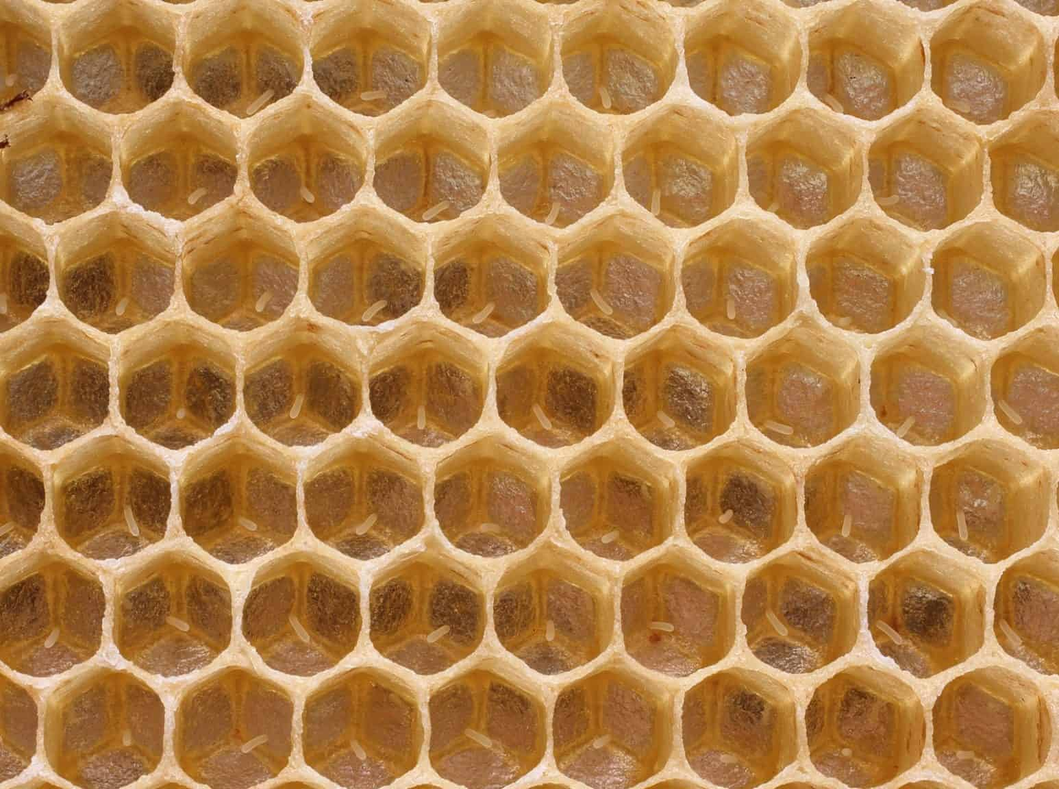 how honey bees reproduce perfectbee