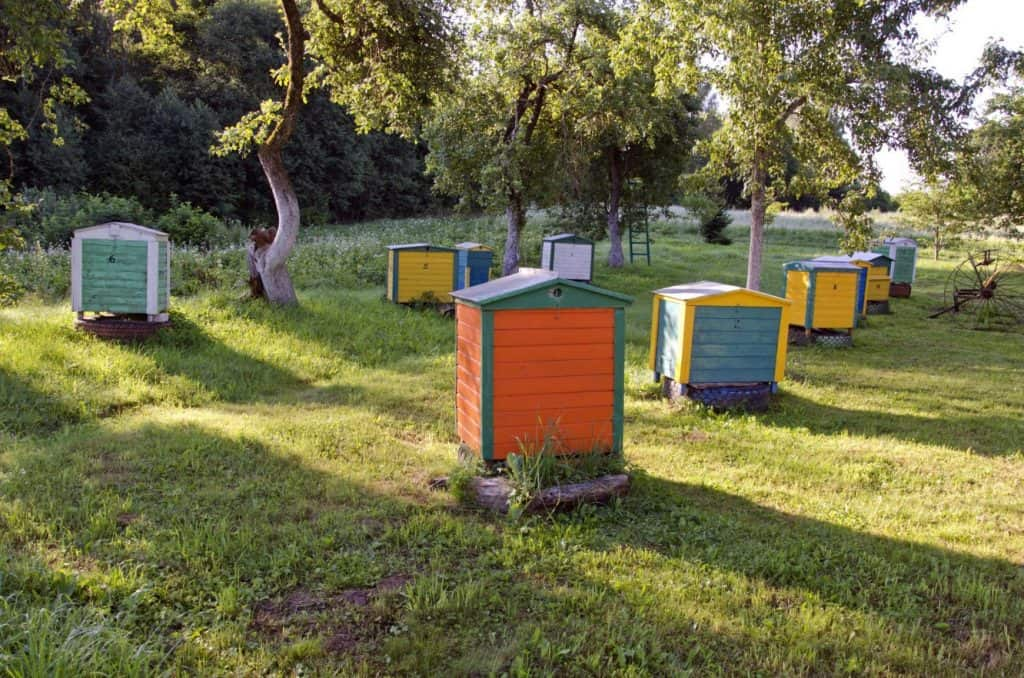 Beehives in field