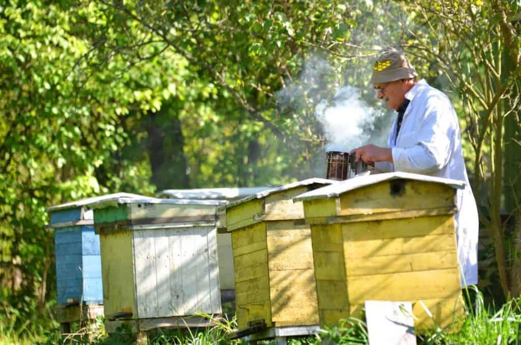 Beekeeper using smoker