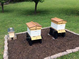 Finished Bee Yard