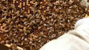 Hive Acquitaine