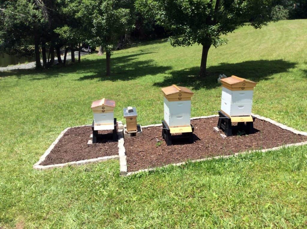 Third Hive Pre-Nuc Installation
