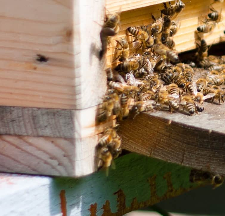 Maintaining the integrity of the beehive