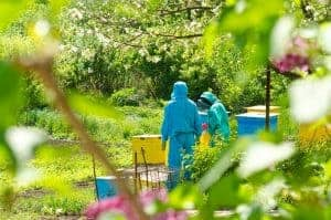 Hives and beekeepers