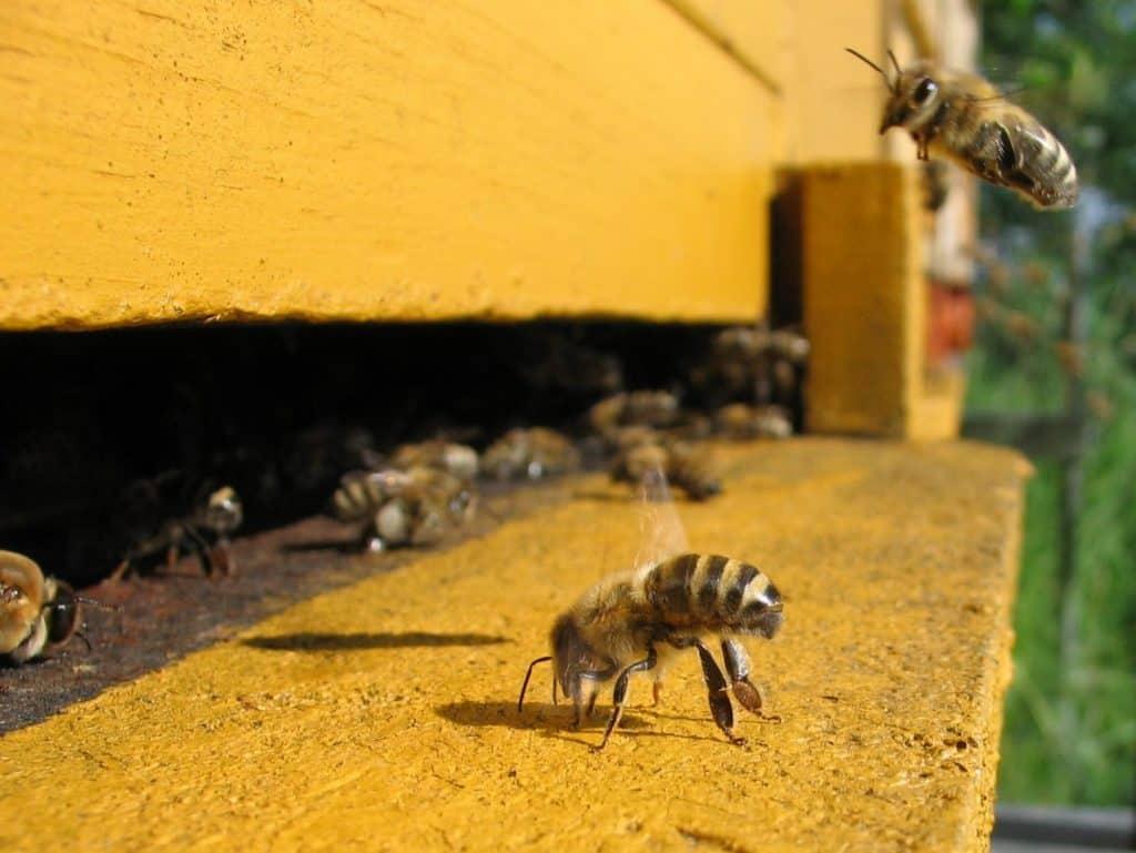 Honeybee cooling