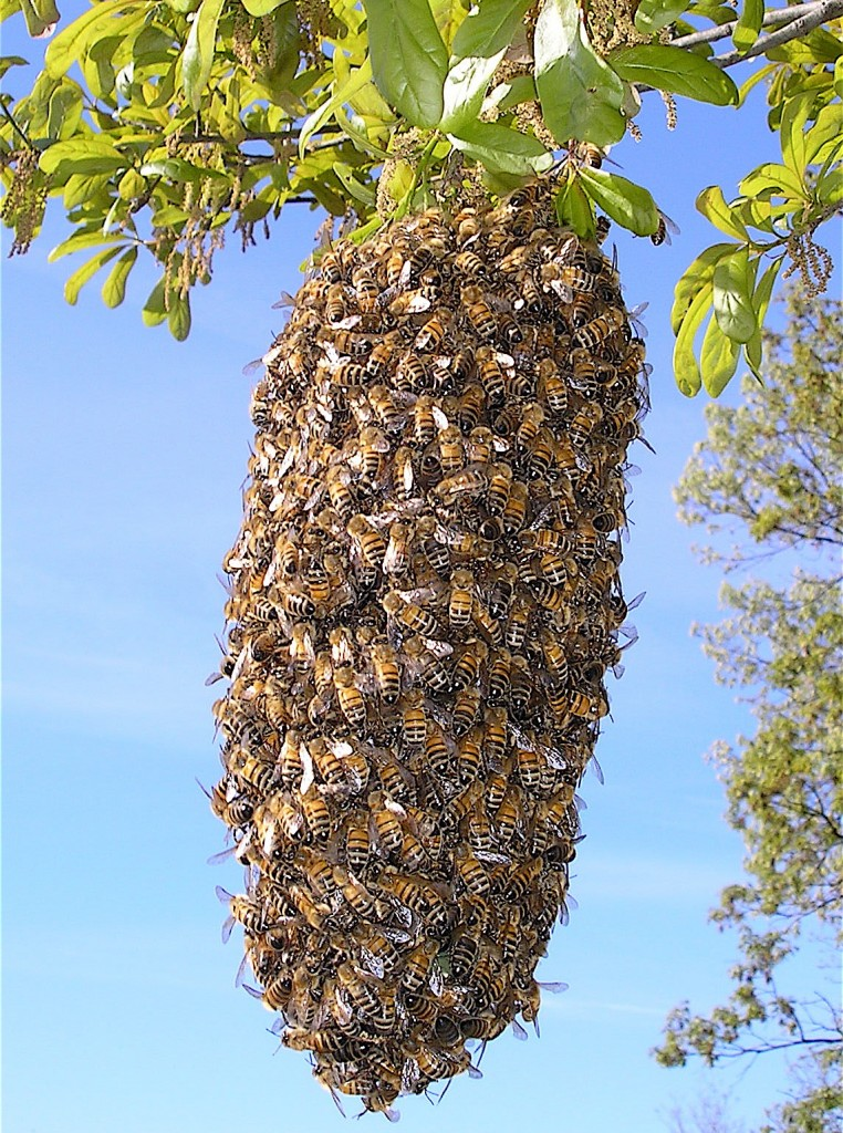The Role Of The Queen Bee Perfectbee