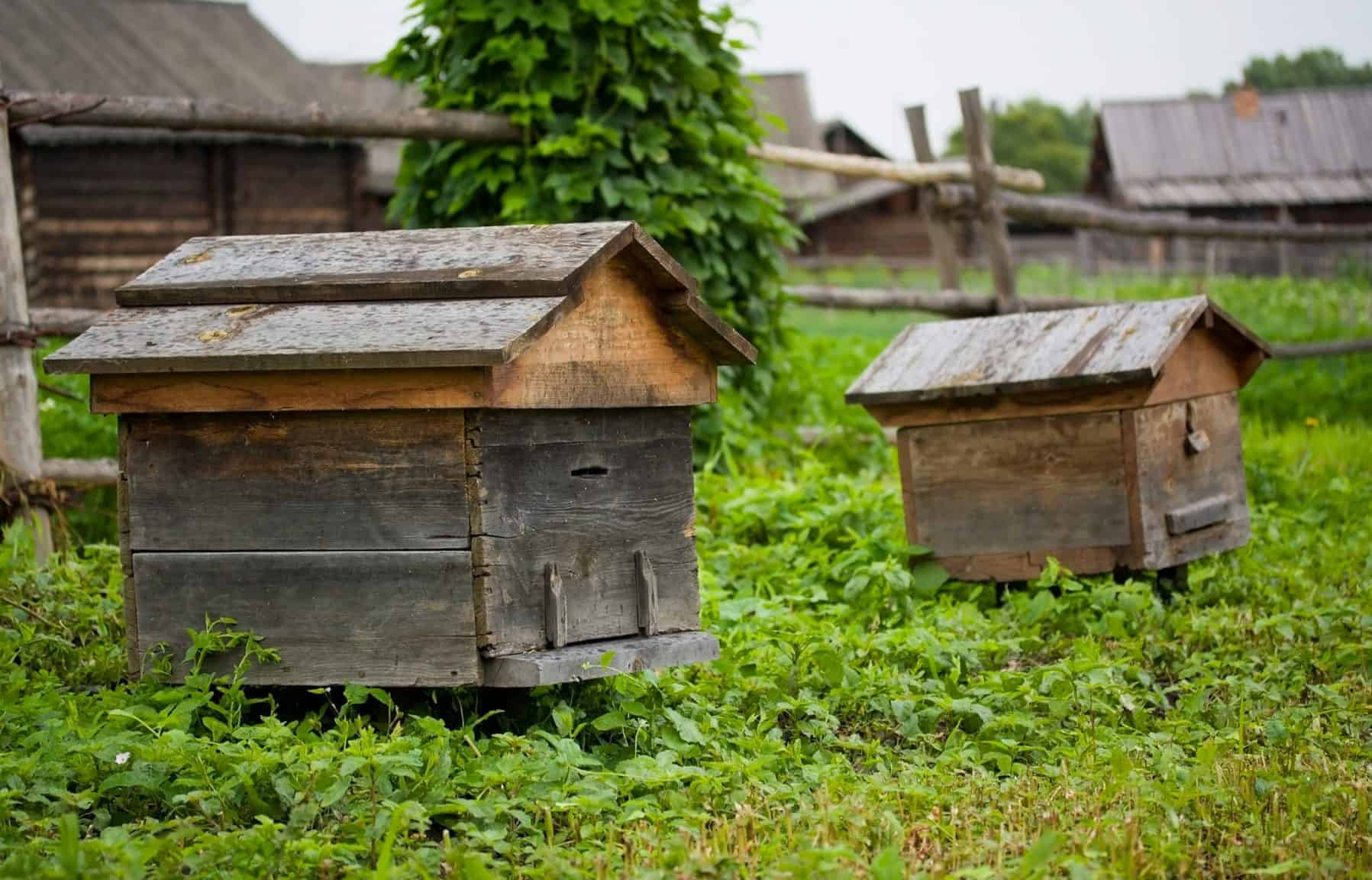 A potted history of beekeeping