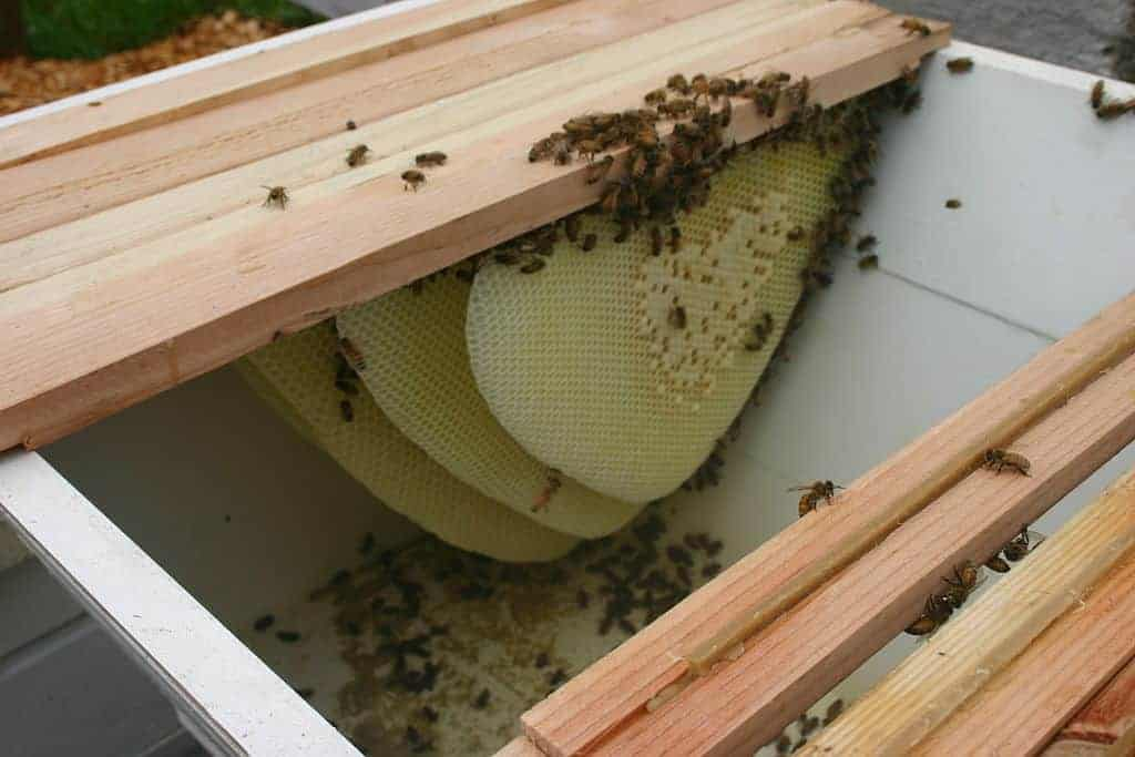 A beekeeper's journey: Part 1 - Choosing the type of hive ...