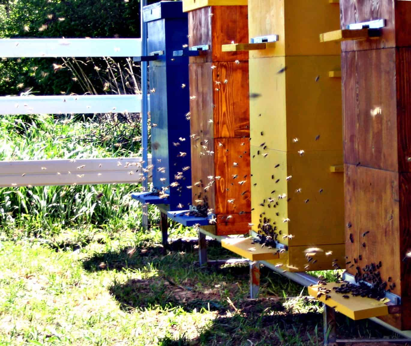 Bees in the Late Summer