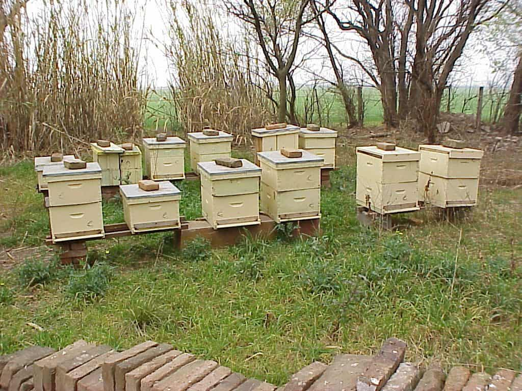 Multiple beehives