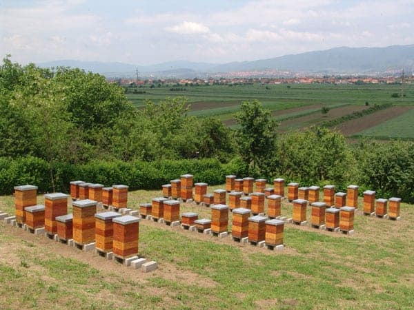 Beehives in the countryside