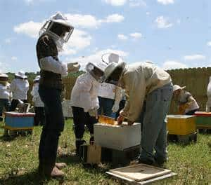 Young Beekeepers