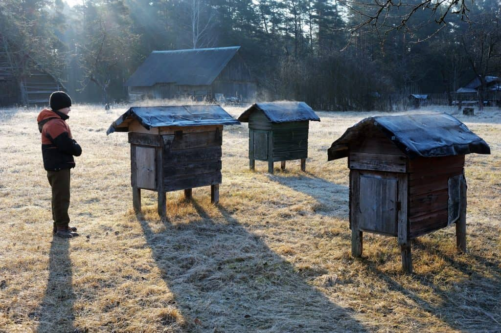 Child with beehives