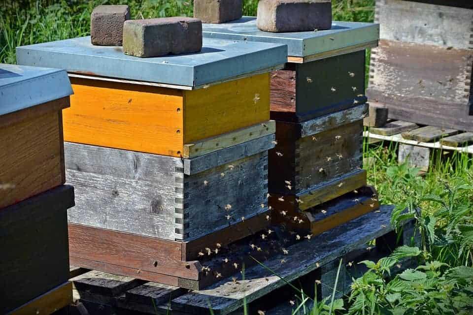 Closed feeding bees