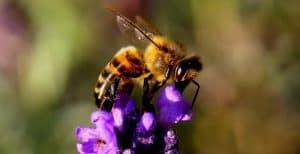 bee-nectar