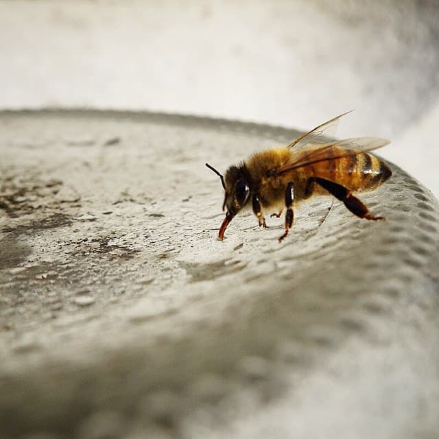 Bee using proboscis