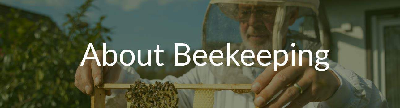About Beekeeping