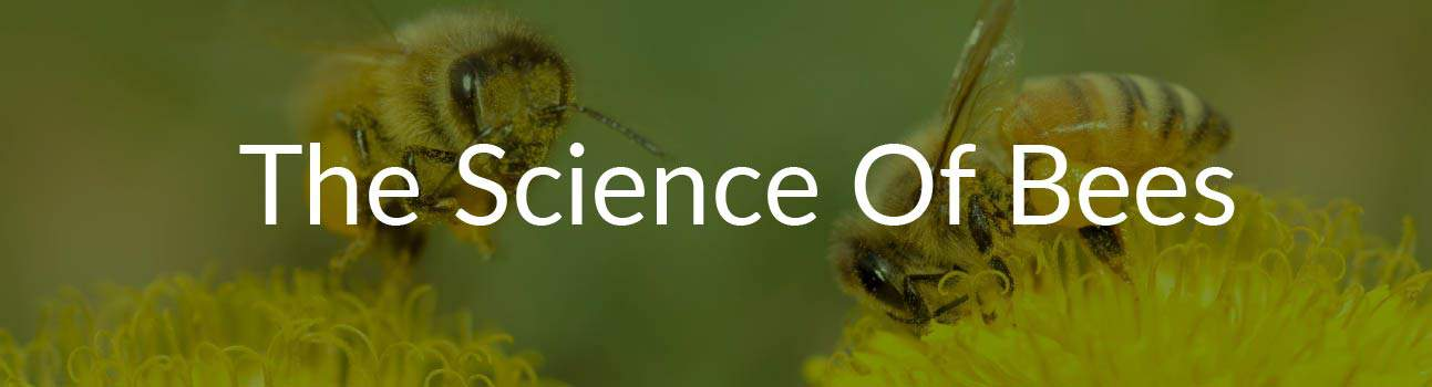 Science of Bees