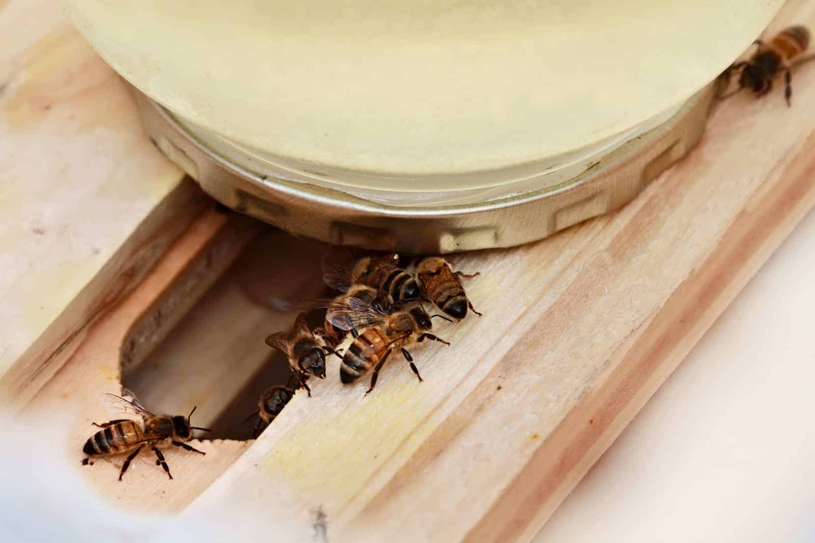 Perspective on feeding bees