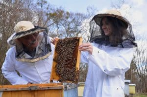 Beekeeper and mentor