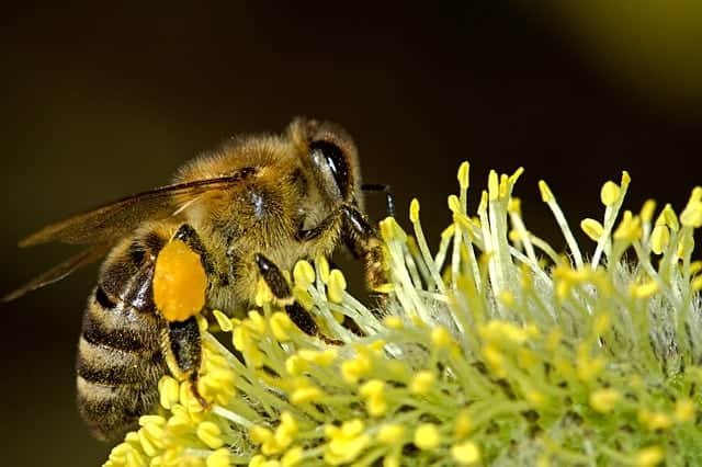 honey-bee-baskets
