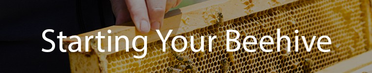 Starting Your Beehive