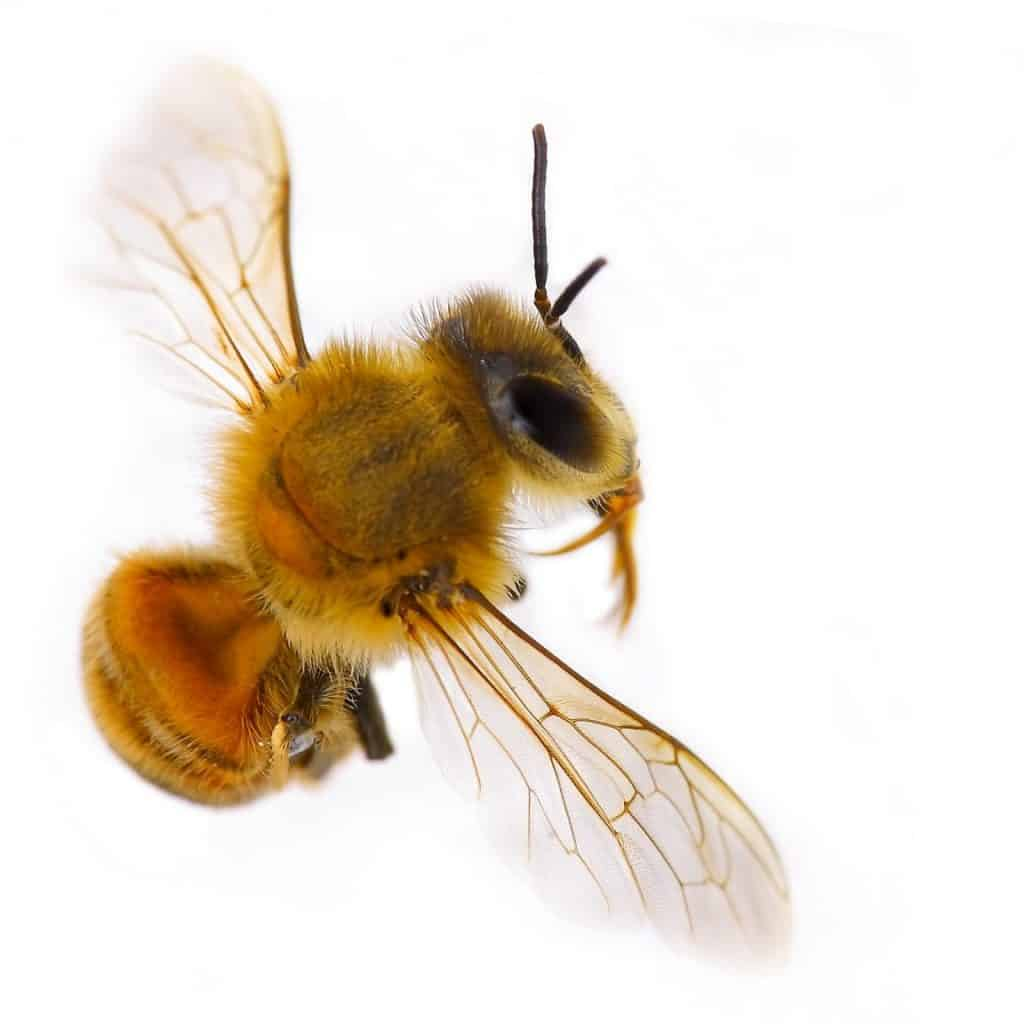 The Science of Bees Archives - PerfectBee