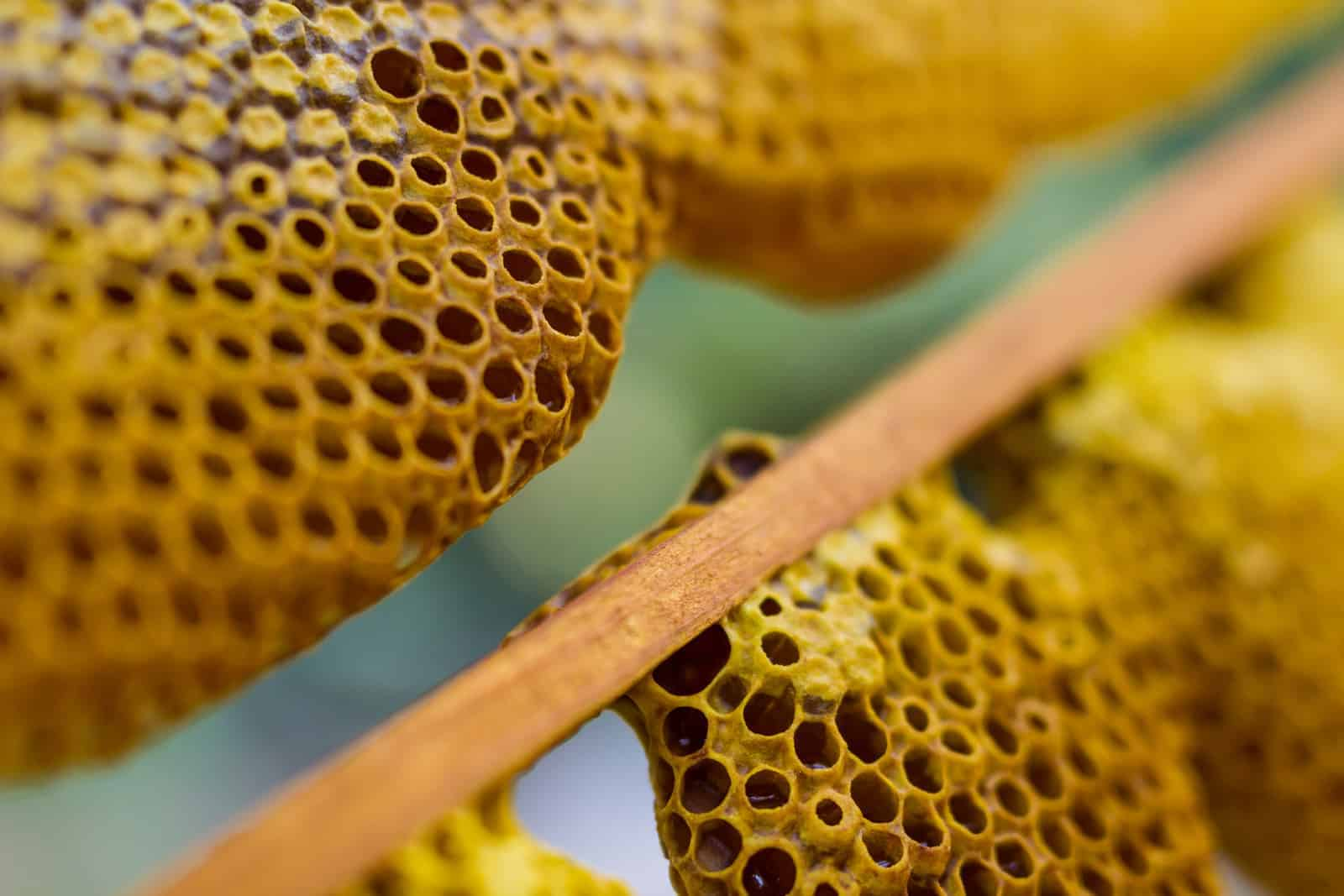 Foundation or Foundationless Beekeeping? - PerfectBee