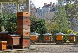Beehives in the city
