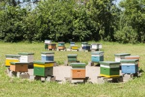 Beehives in an apiary