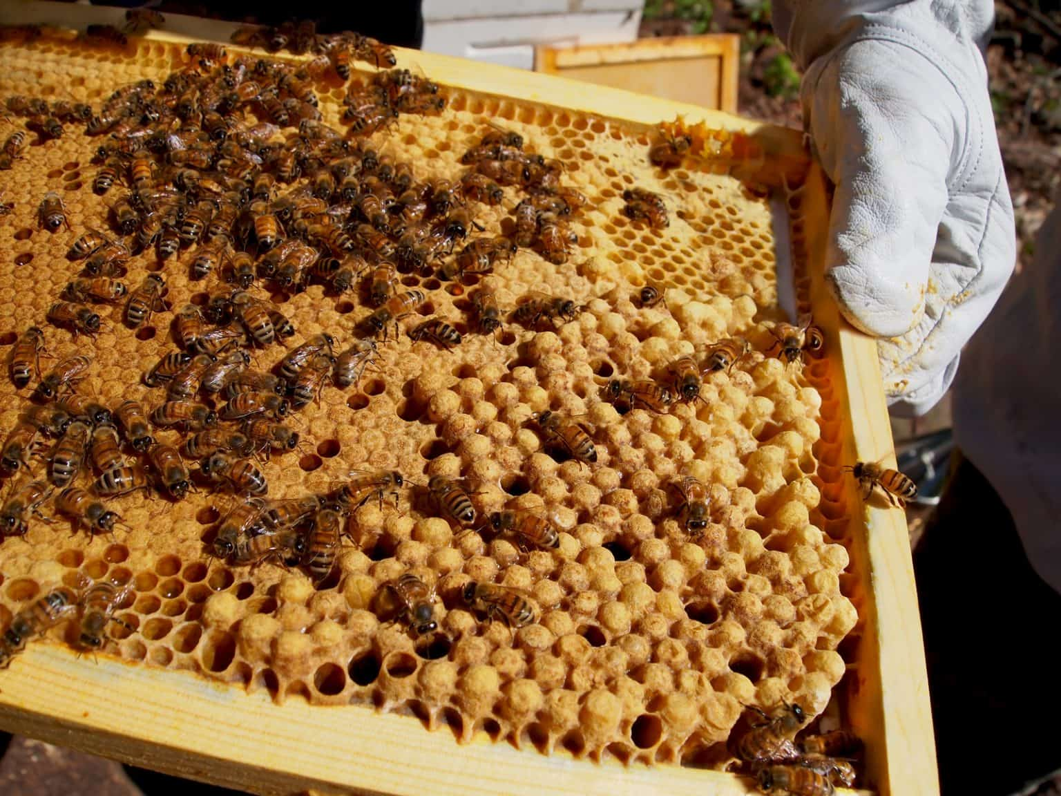 how to build a brood box for bees