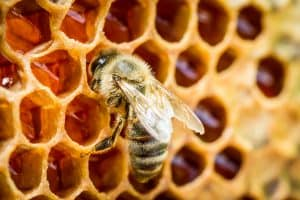 Bee on comb