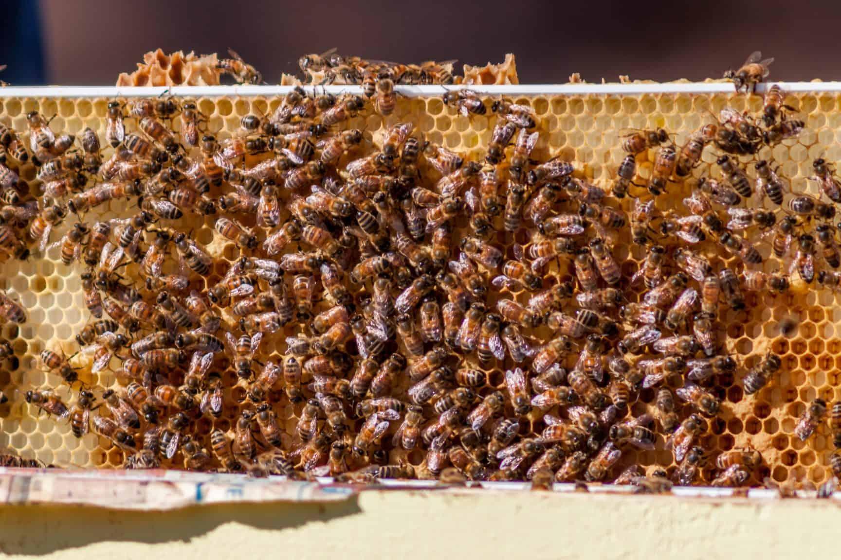 Managing Hive Capacity - PerfectBee