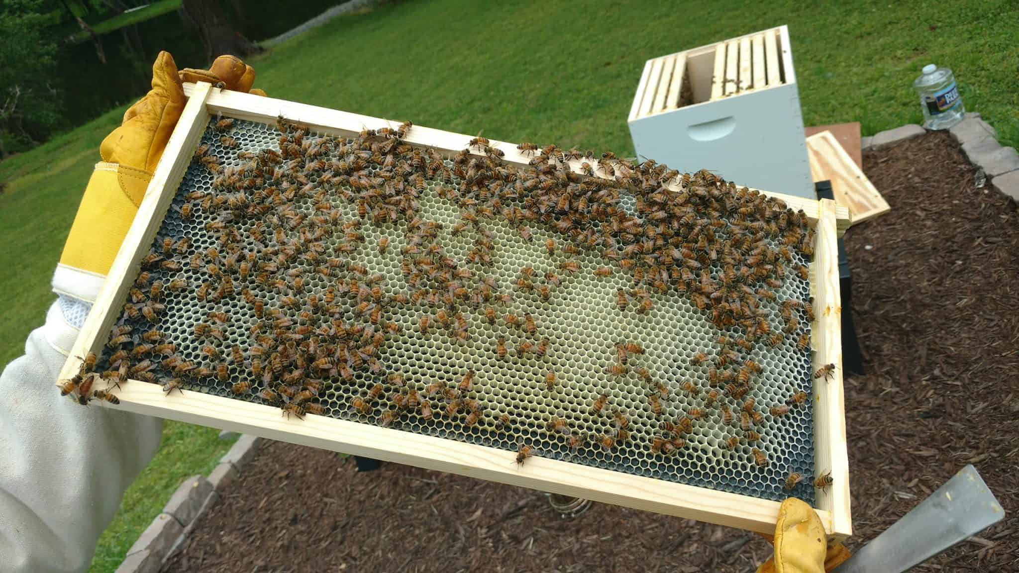 Setting Up a Langstroth Hive