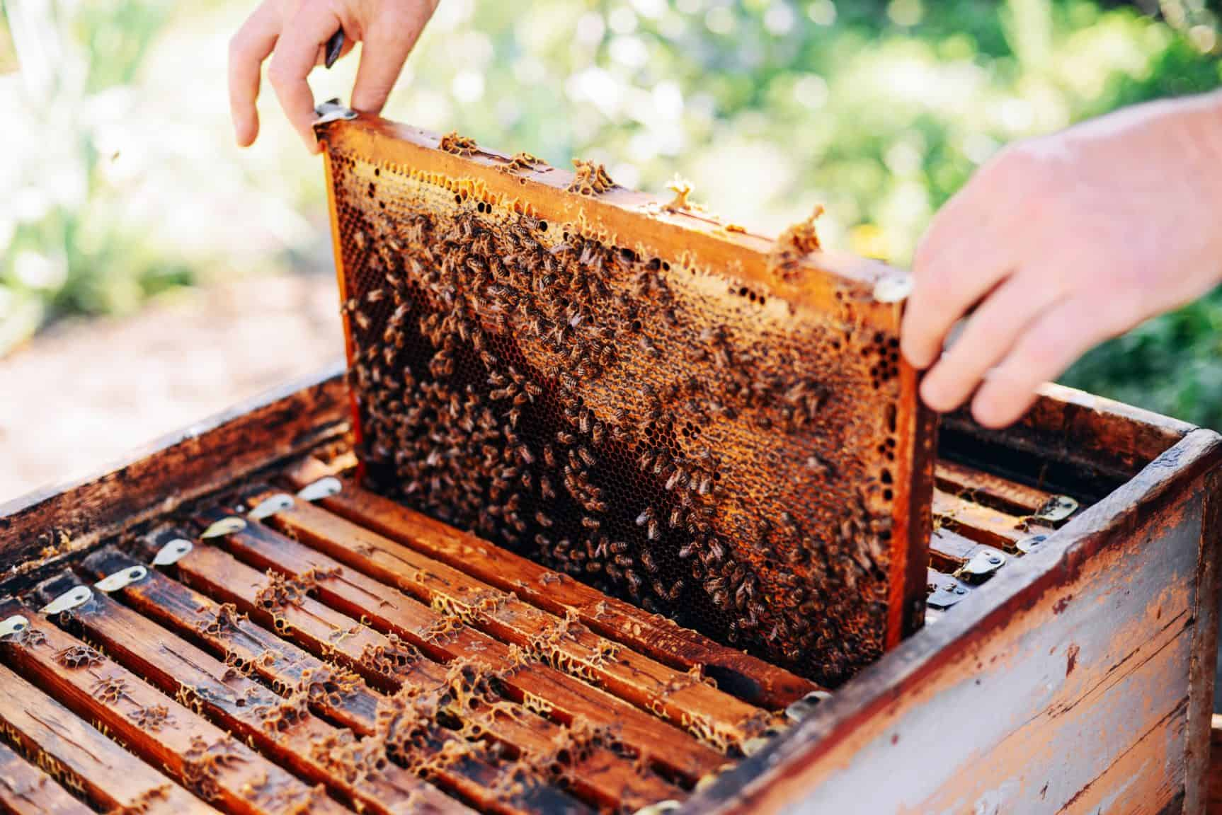 Considering the Joys of Beekeeping