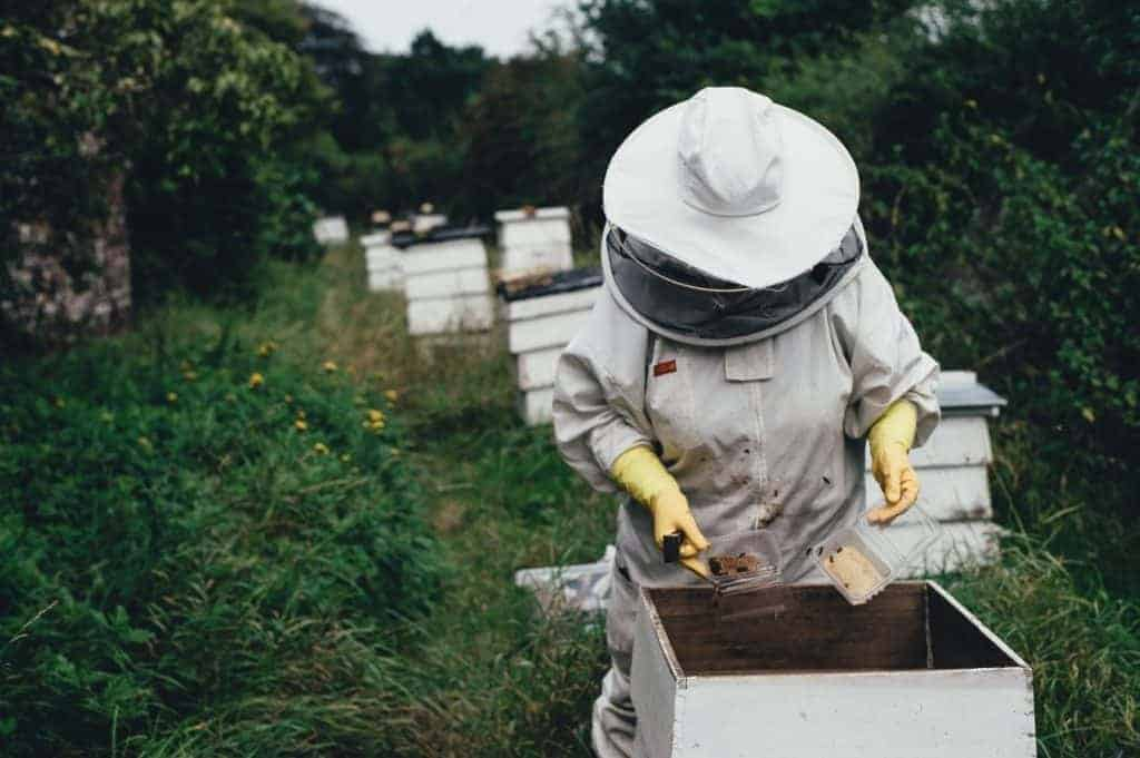 Beekeeper at hive
