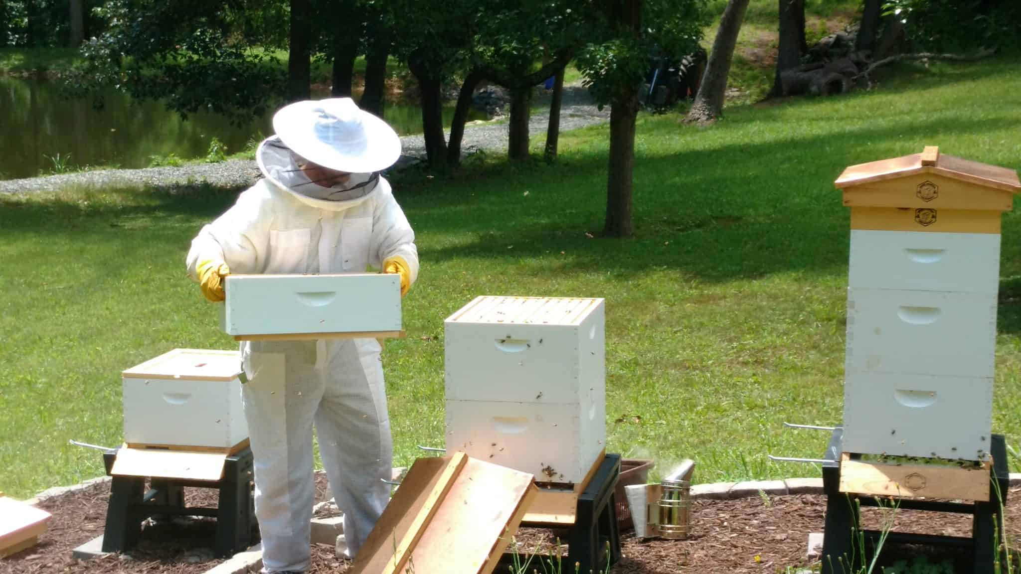 Hive Inspections and Recordkeeping