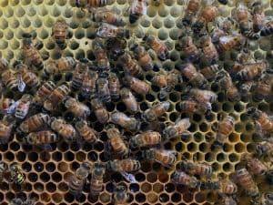 More Honey Stores
