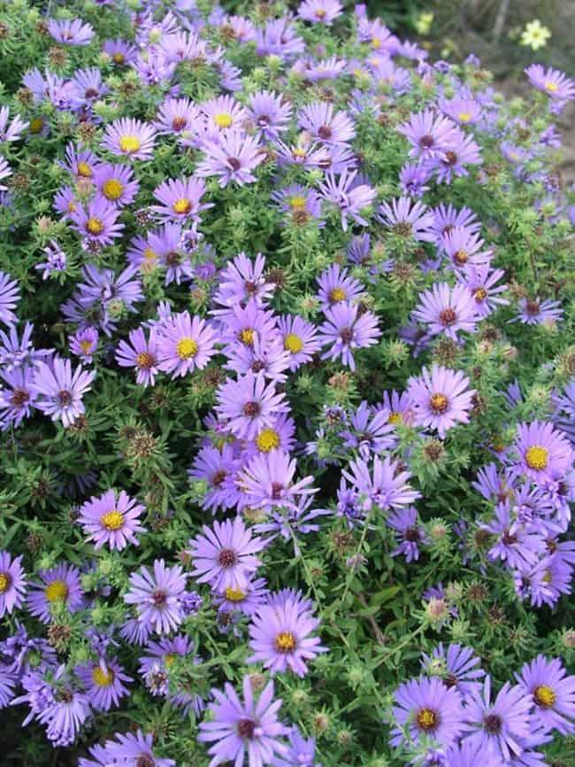 Gardening For Beekeepers Flowers That Honeybees Love