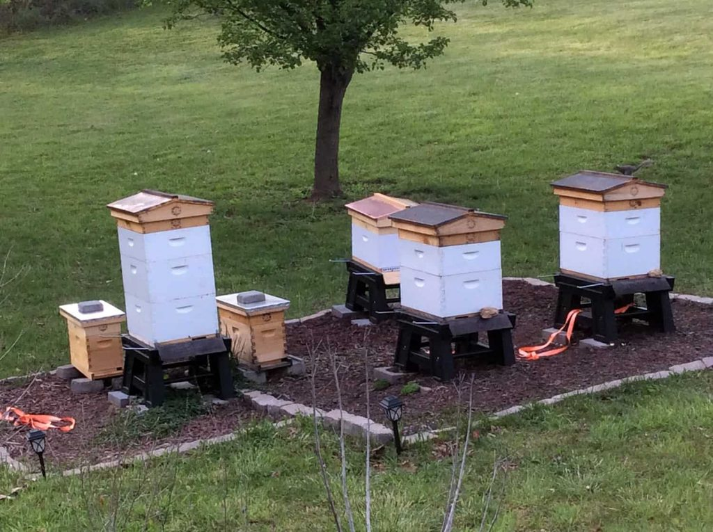A Growing Apiary