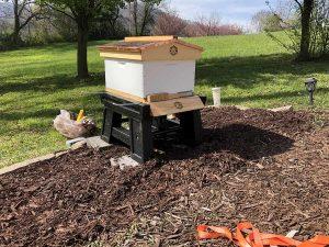 The New Hive Box