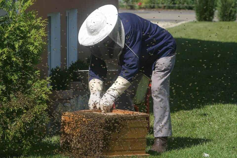 Beekeeper flurry