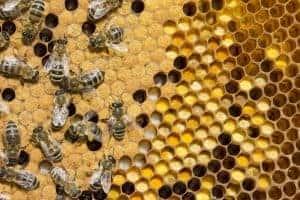 Pollen in hive