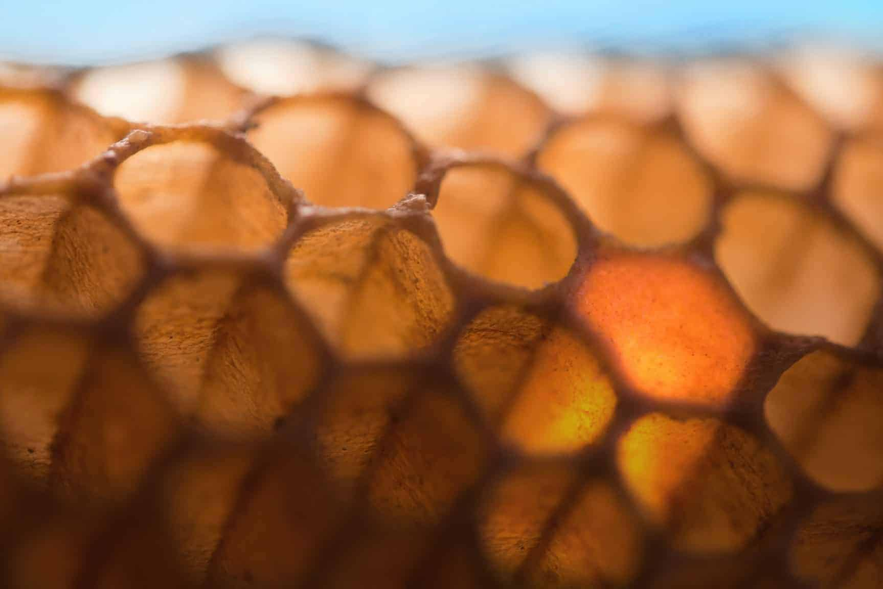 Close-up of a honeycomb filled up with honey .