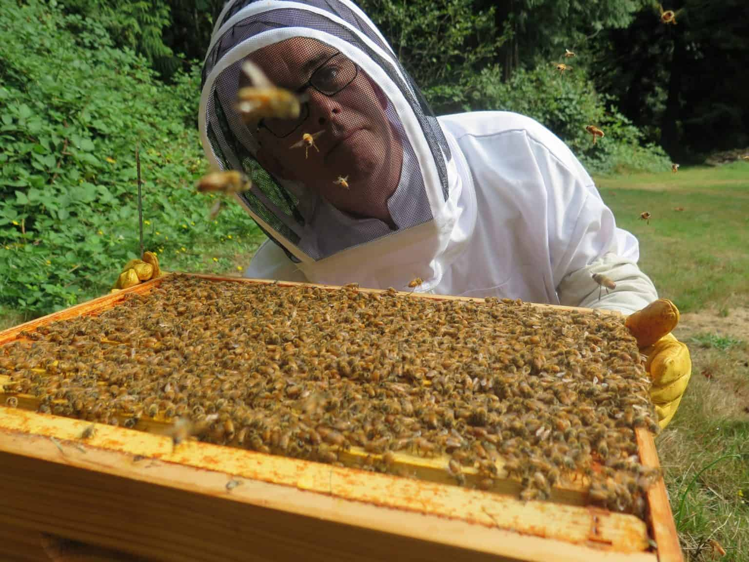 Is Beekeeping Right For You - PerfectBee